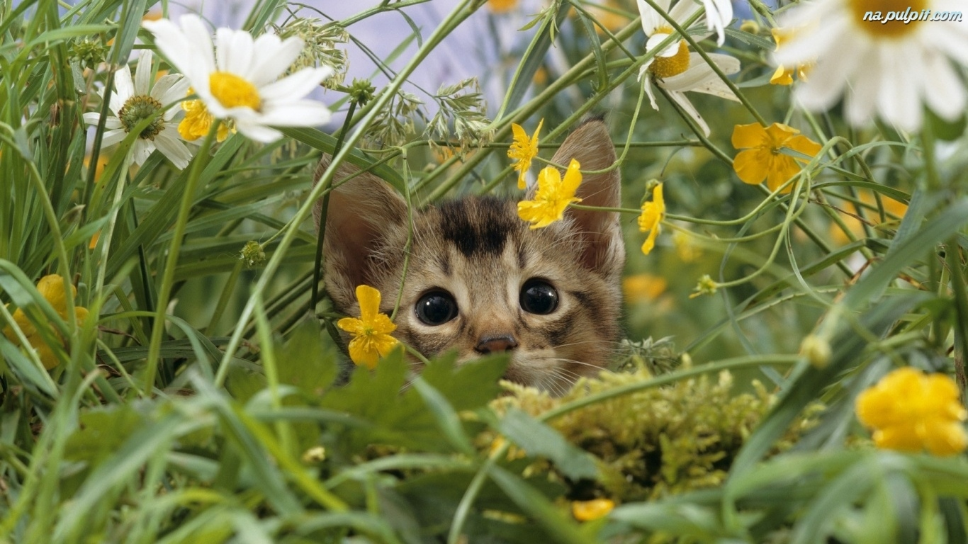 Pin Kwiaty Na łące 1600x900 on Pinterest